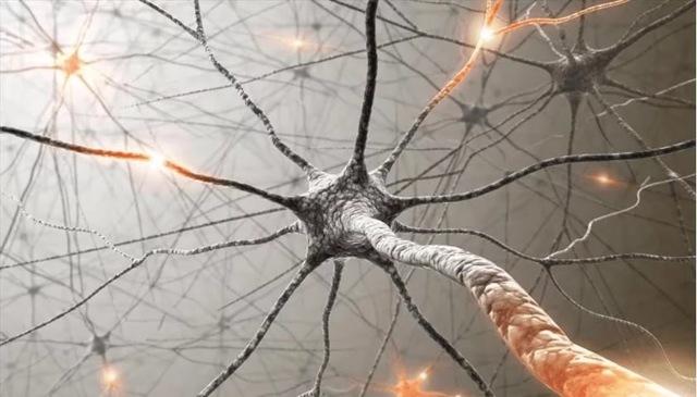 Что такое синапс и синаптическая щель