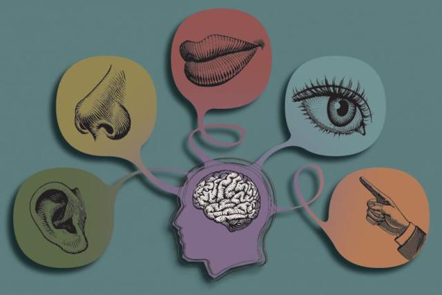 Какие виды ощущений существуют в психологии