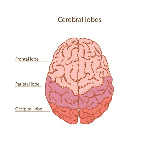 Что это такое лоботомия: описание операции и ее последствия