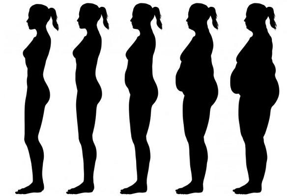 Что такое фенотип и чем он отличается от генотипа?