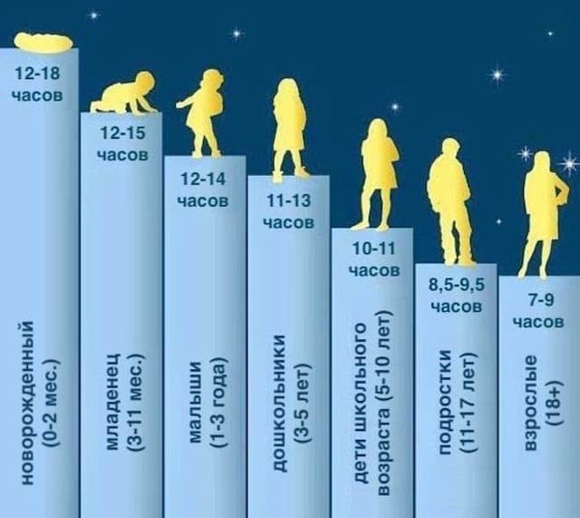 Фазы и стадии сна, их характеристики