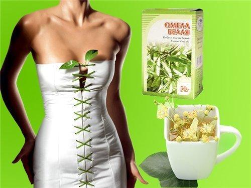Трава омела белая для похудения, цена в аптеке: Где купить в Москве