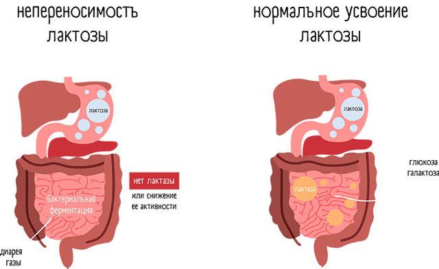 Кефир с корицей и имбирем для похудения: Рецепт