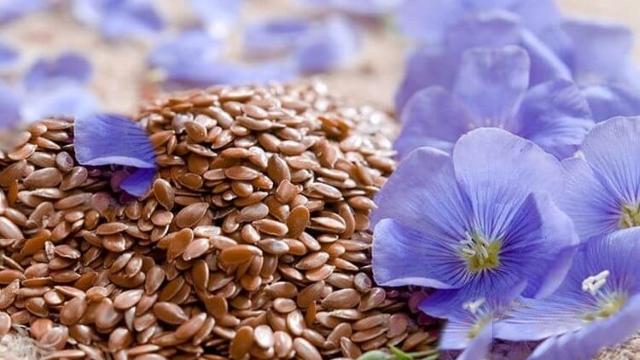 Семена льна для похудения. Как принимать, рецепты и отзывы, полезные свойства семечек