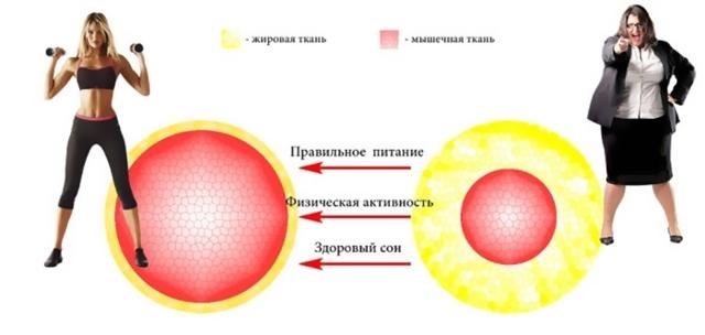 Как ускорить метаболизм для похудения: Препараты и средства из аптеки, чем ускорить и усилить